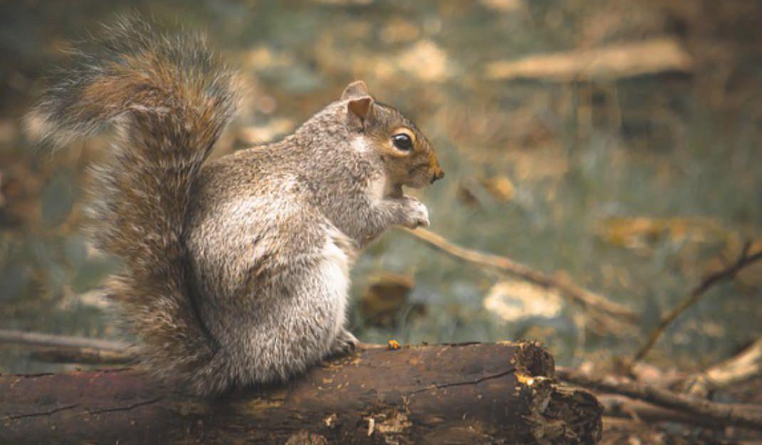 Ohio Rodents - Lakewood Exterminating