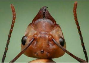 ants head closeup